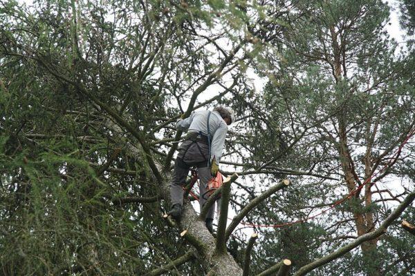 Arborist Tree Service Albuquerque NM