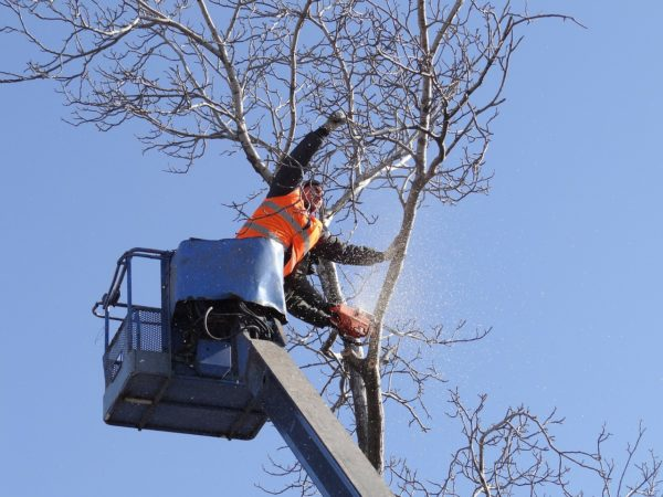 Tree Removal & Clearing Albuquerque NM
